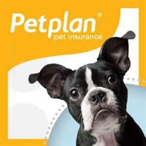 pet health insurance