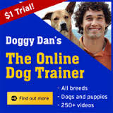 Doggy Dan The Online Dog Trainer Reviews