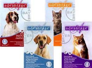 Best Flea Medicine for Dogs and Cats – What is Advantage II and How Does it Work?