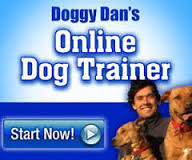 online dog trainer start now box