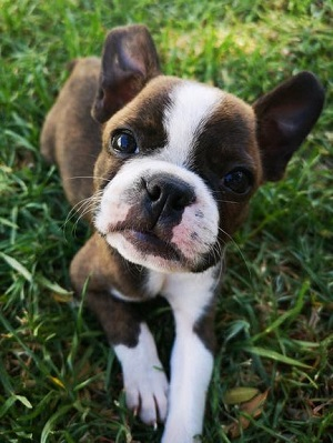 How to Get Puppies to Quit Biting – The Biggest Mistake You're Making!