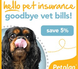 Best Pet Health Insurance Review – Pet Plan is the World's Largest Pet Insurance Provider