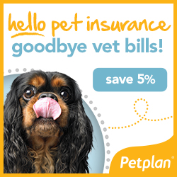 is pet insurance worth it for dogs