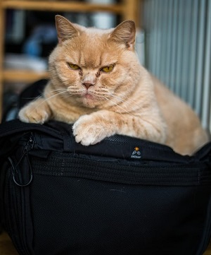 Taking Your Cat on a Vacation – Tips for Traveling With a Cat