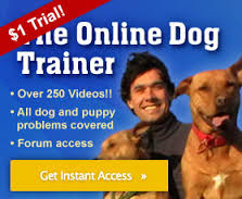 help dog behavior problems