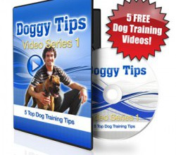 Dog Leadership Techniques – Free Video!