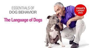 Cesar Millan Dog Language – Essentials of Dog Behavior DVD
