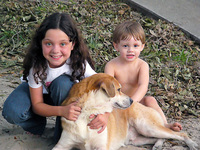 10 Best Dog Breeds for Families with Children