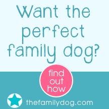 Buy Pet Gifts Online