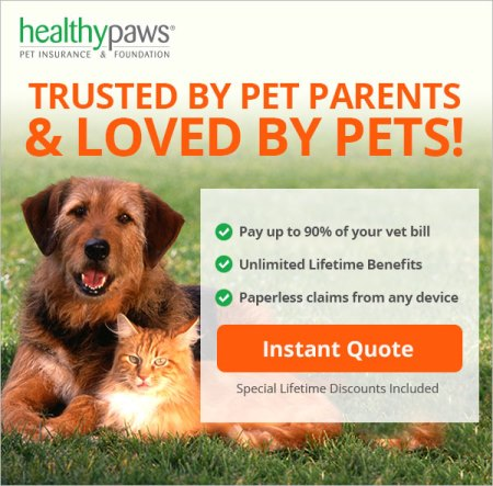 Healthy Paws Insurance Review – Healthy Paws Wins for 2012, 2013, 2014, 2015 and 2016!