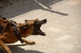 How to Control Aggressive Dog Behavior – Tips from a Professional Dog Trainer