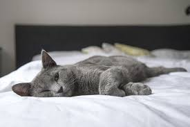 how to stop your cat from peeing on the bed