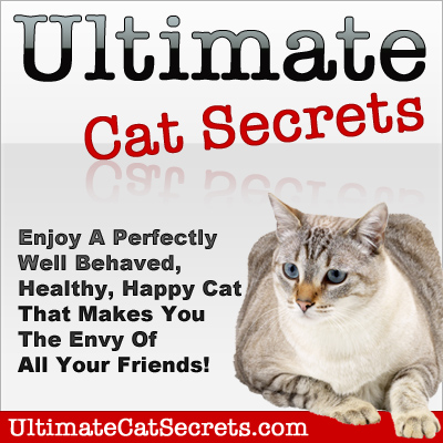 domestic cat behavior explained