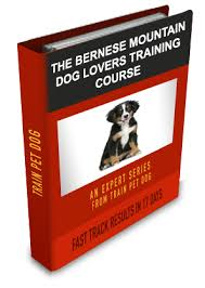 Free Dog Training Basics