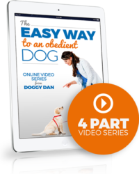 dog obedience training free video course
