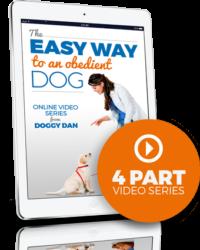 Help Dog Behavior Problems – Free Video
