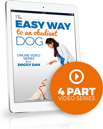 Help Dog Behavior Problems – Free Video