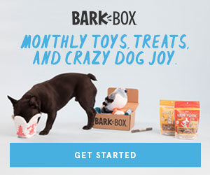 bark box for cats