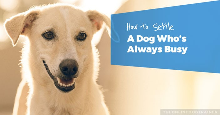 how to calm a dog down