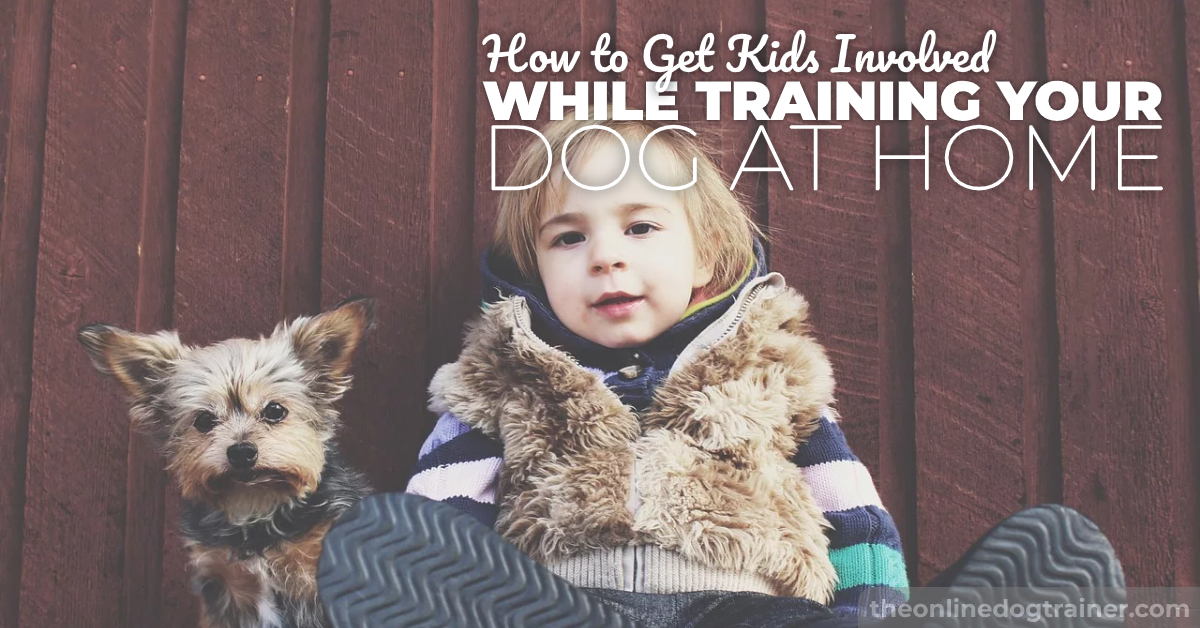 puppy training for the kids