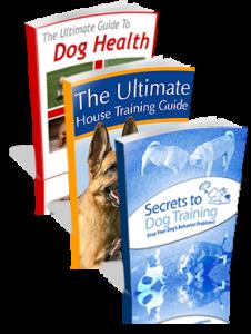 solve dog behavior problems