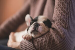 Why Do Puppies Sleep So Much?